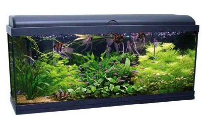 Acquariologia acquario aquadream 100 nero acquatlantis for Acquario marino 100 litri prezzo
